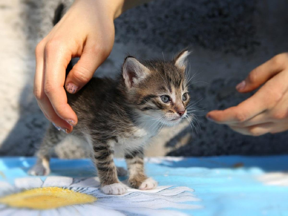 gattino accudito dal padrone