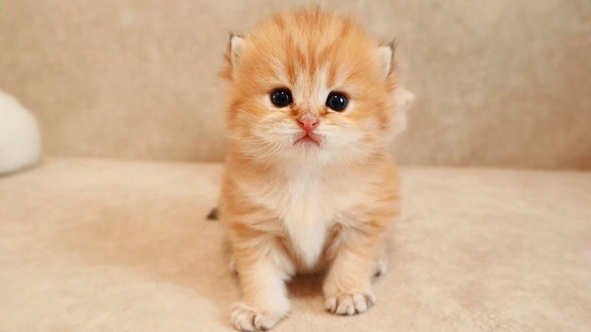 gattino in bagno