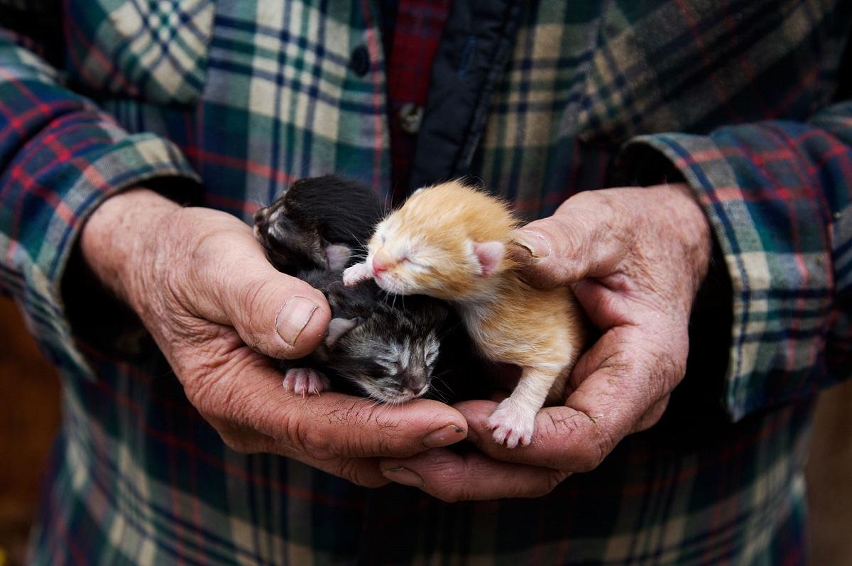 gattini molto piccoli tenuti in mano