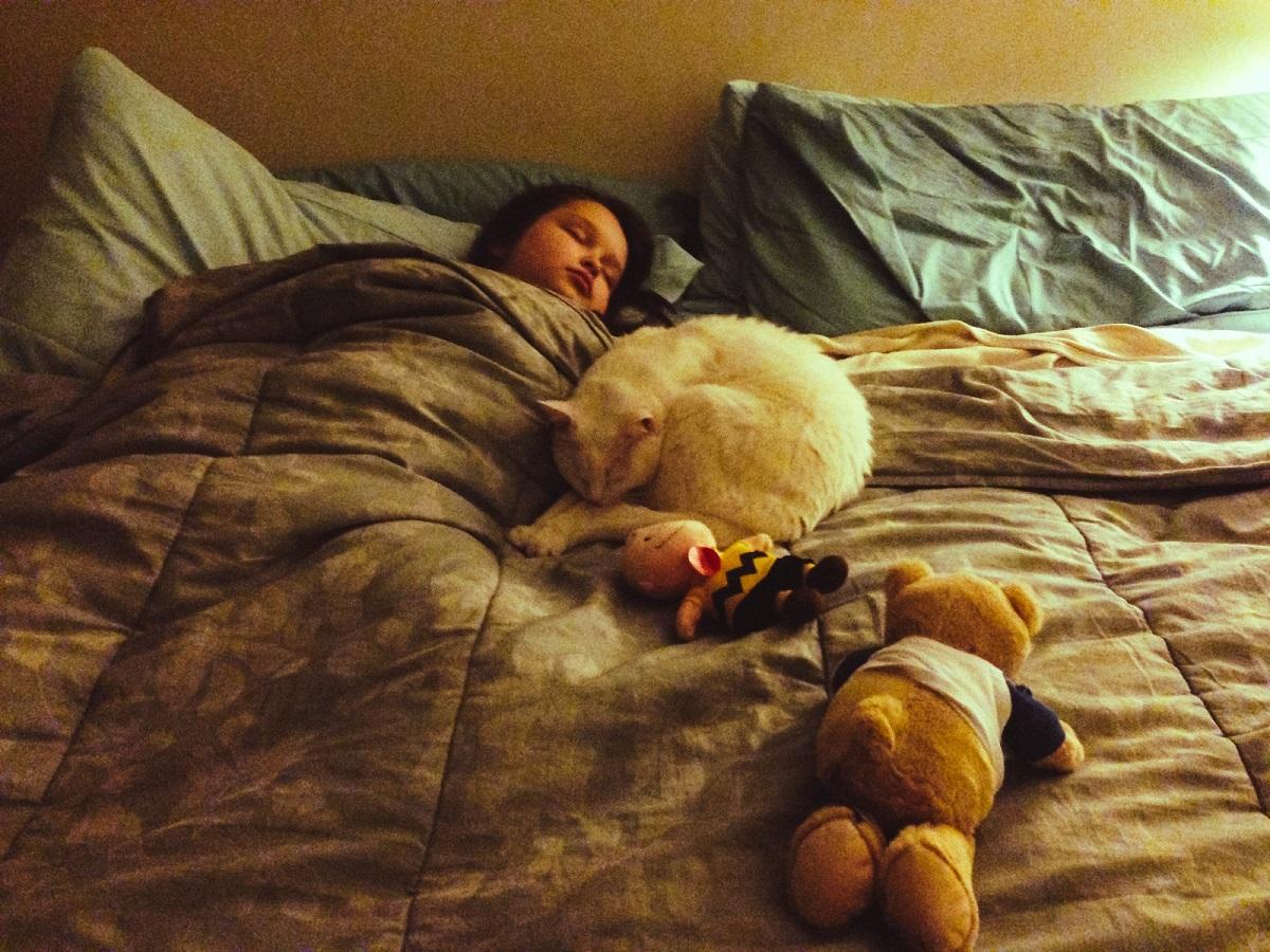 gatto bianco dorme sul letto