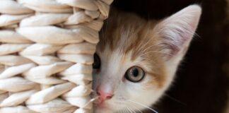 gattino sordo ombra