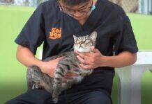 gattino ferito in Thailandia salvato dai volontari