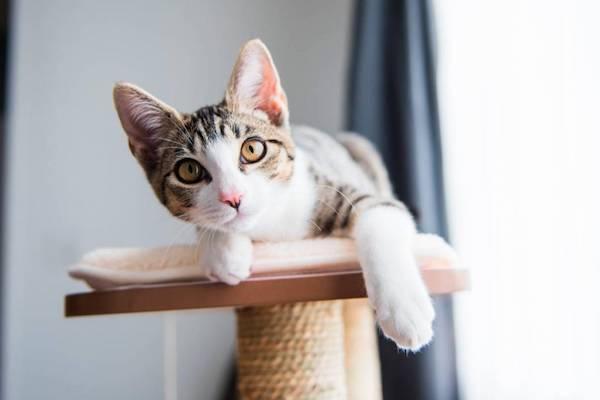 gattino ha paura delle altezze