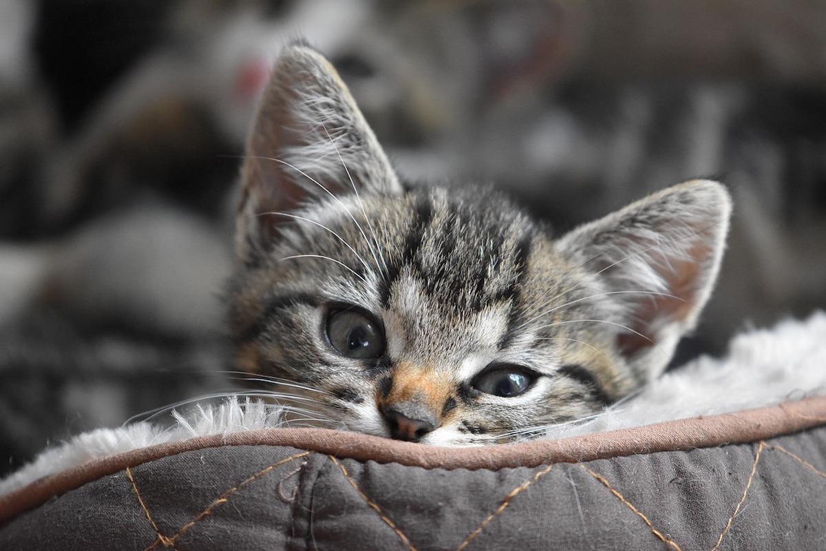 piccolo felino dolce