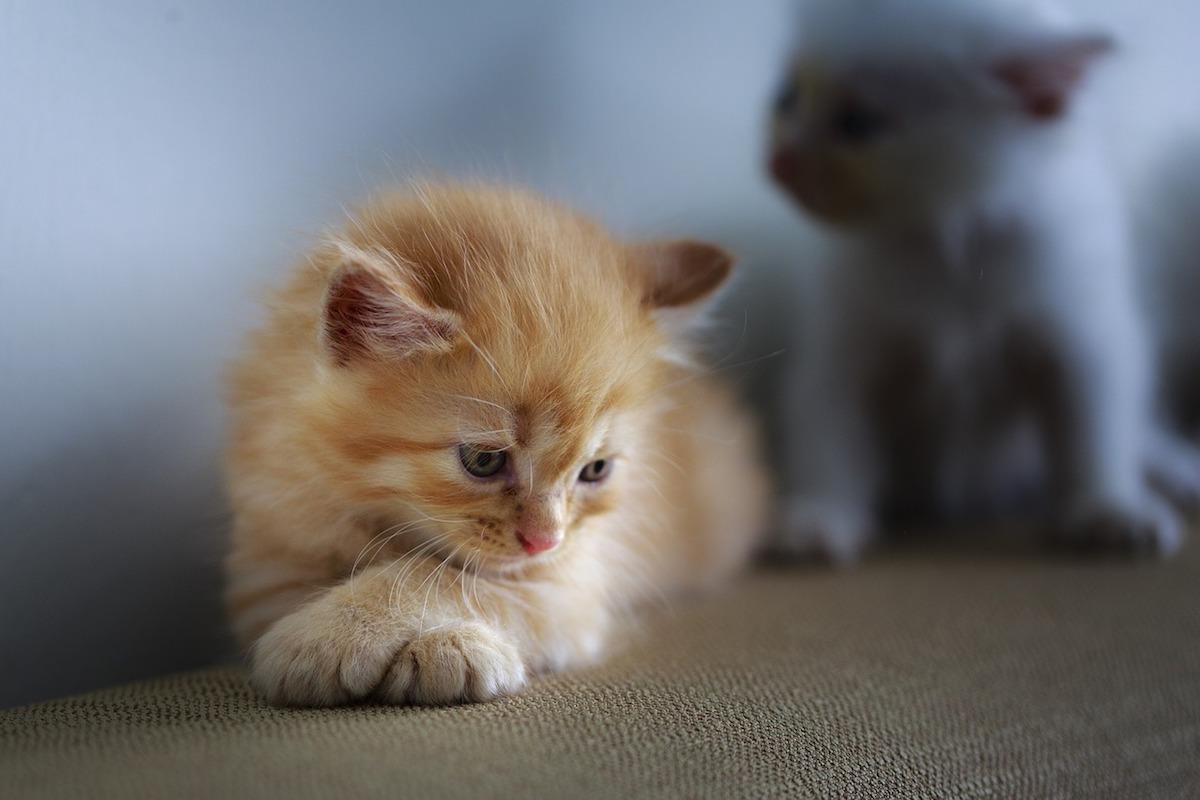 piccolo felino pensieroso