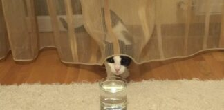 gattino bicchiere acqua