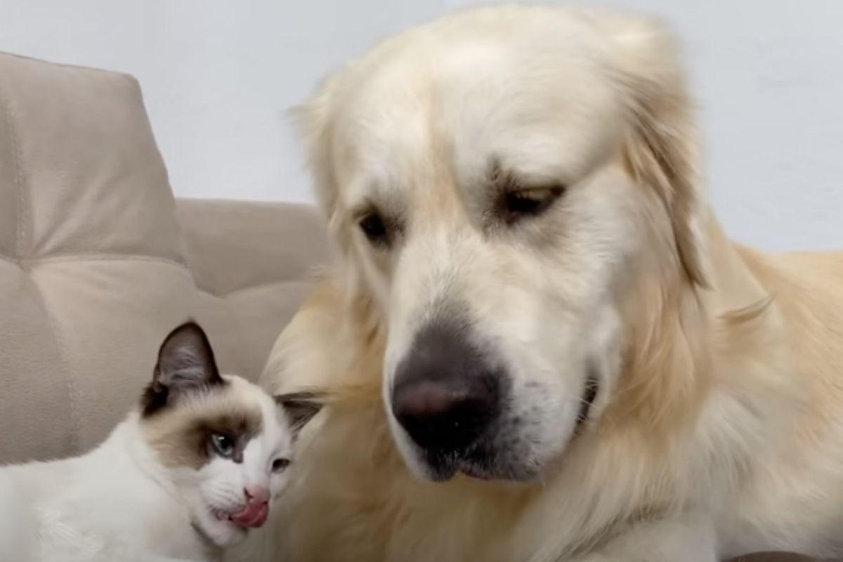 gattino bacia cane