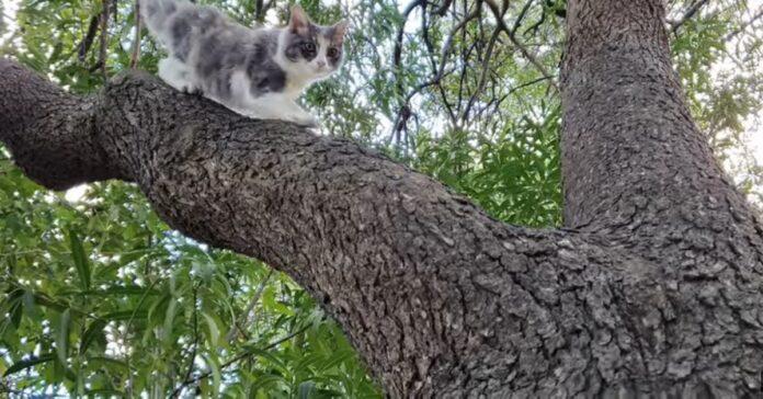 gattino scende albero