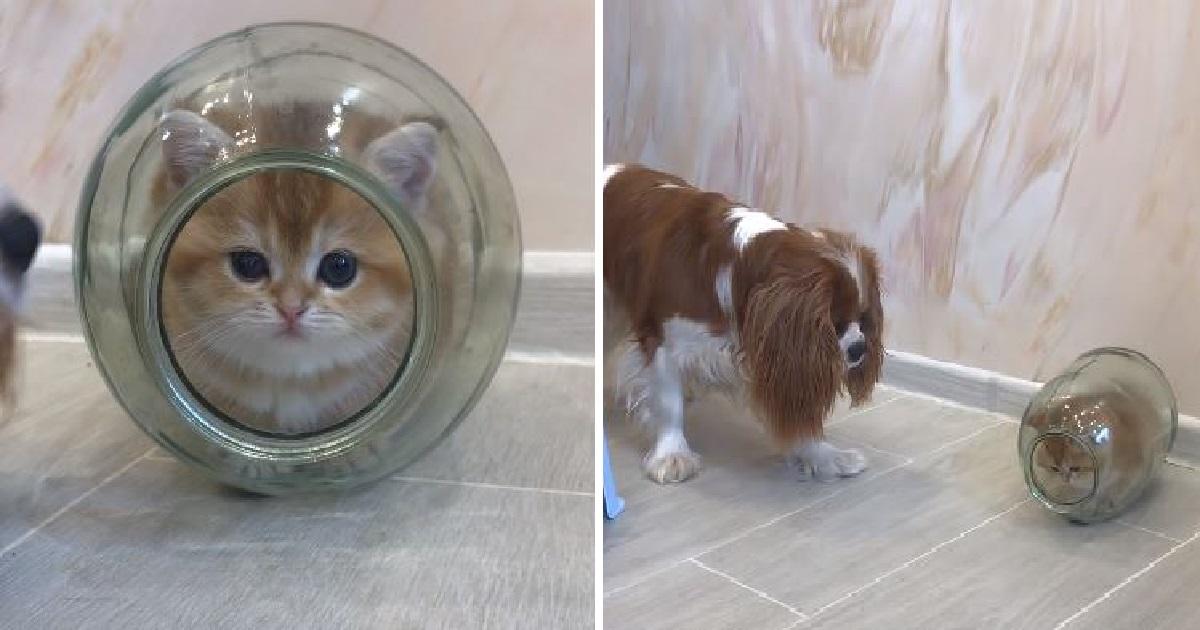 gattino cagnolino nascondere