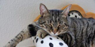 gattino soriano divano
