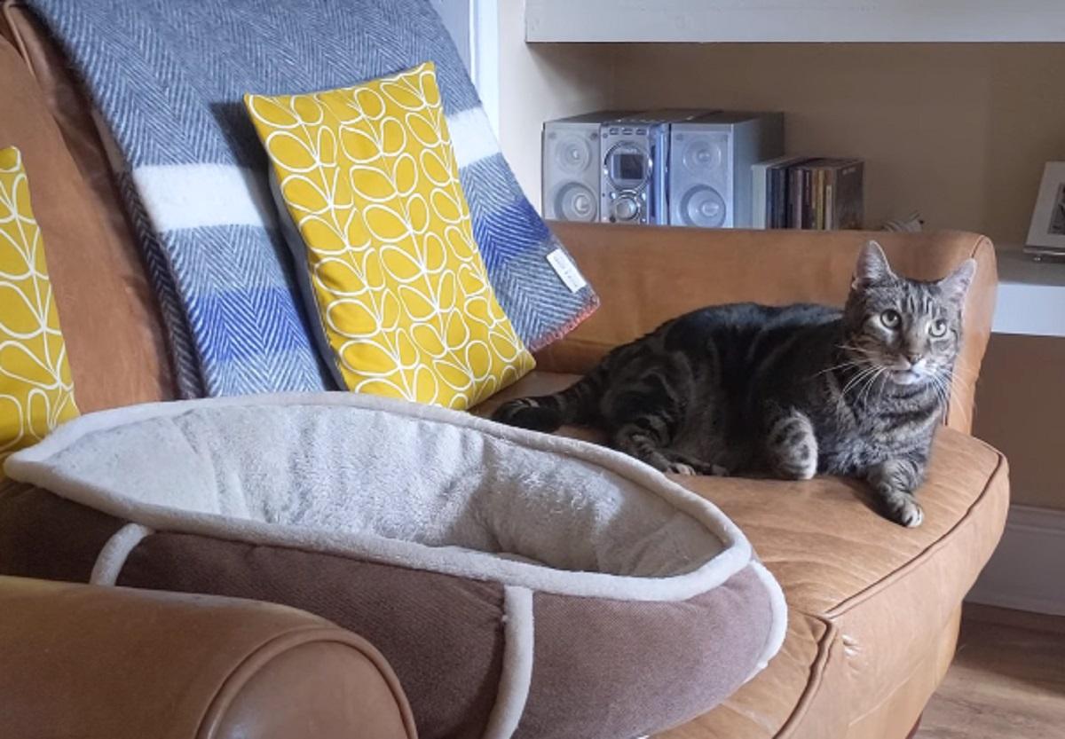 divano gattino foto