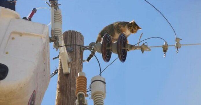 gattino linea elettrica