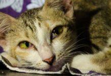 gatto adulto feci molli e maleodoranti