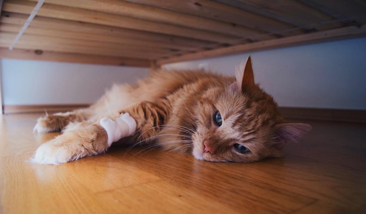 gatto si nasconde sotto il letto