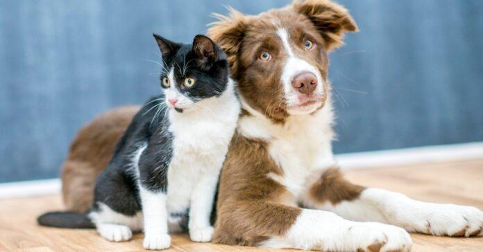 cane e gatto che vivono insieme