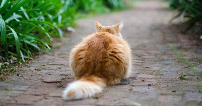 gatto che vive in strada