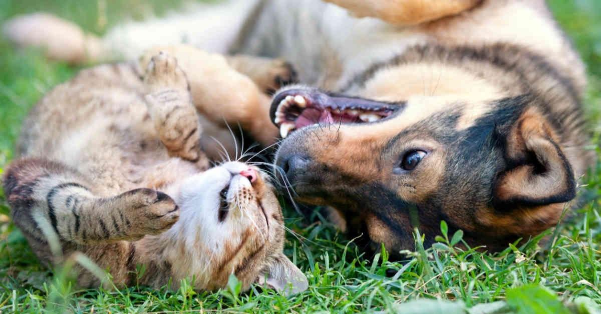 cagnolino e gattino sull'erba