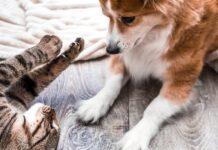 gatto e cane giocano