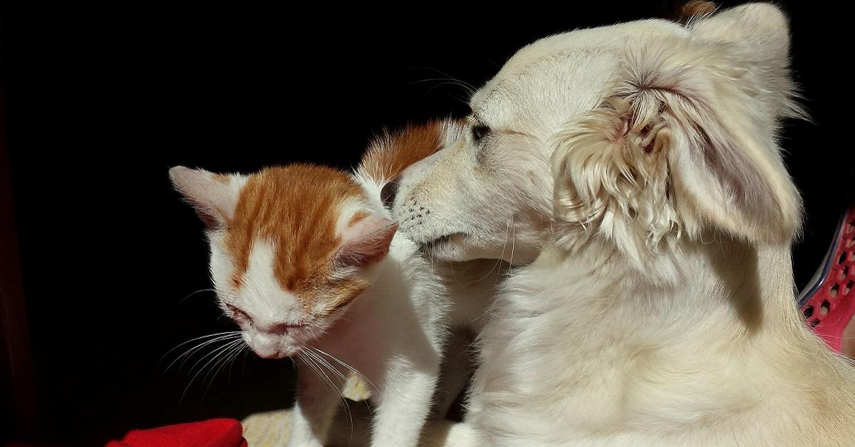 cane bianco e gatto rosso e bianco