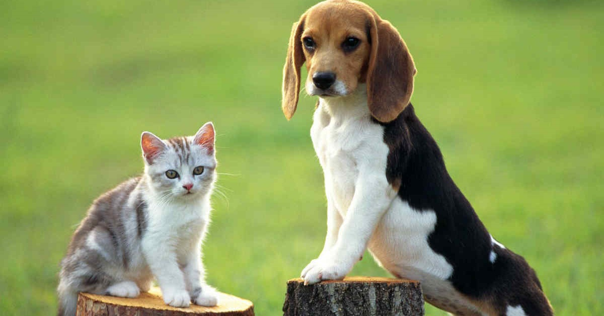 cane e gattino su tronchi