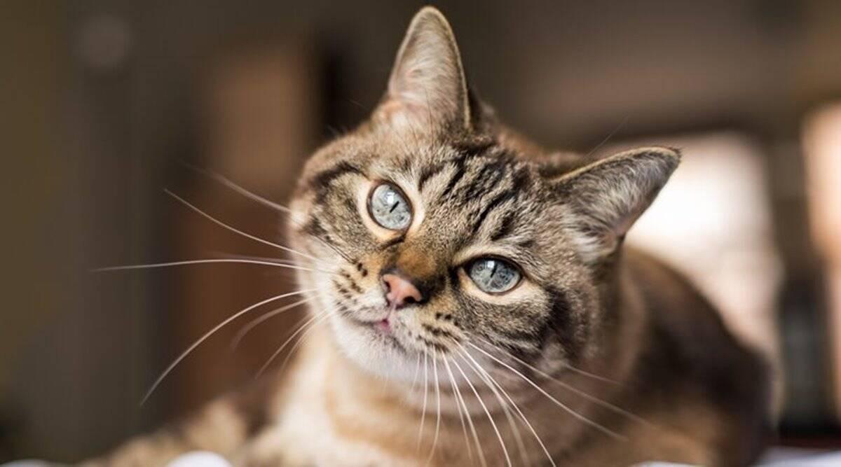gatto con lo sguardo dolce