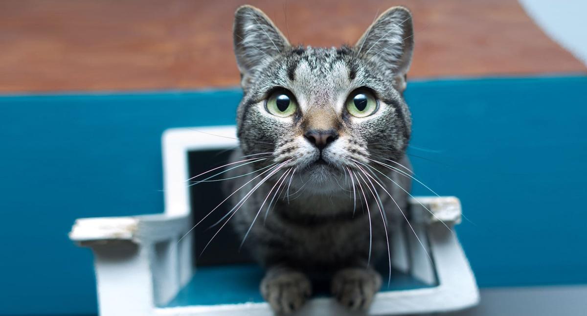 gatto seduto su una manchina