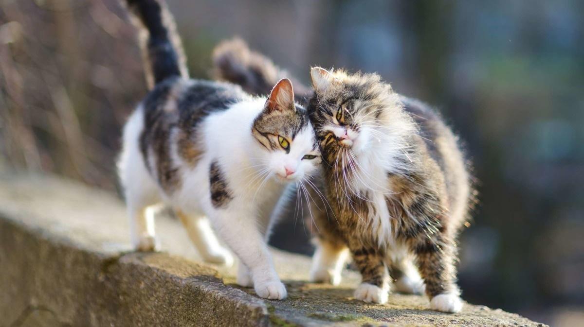 gatti che si fanno le fusa