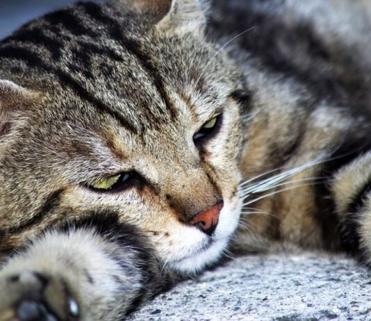 gatto in totale relax