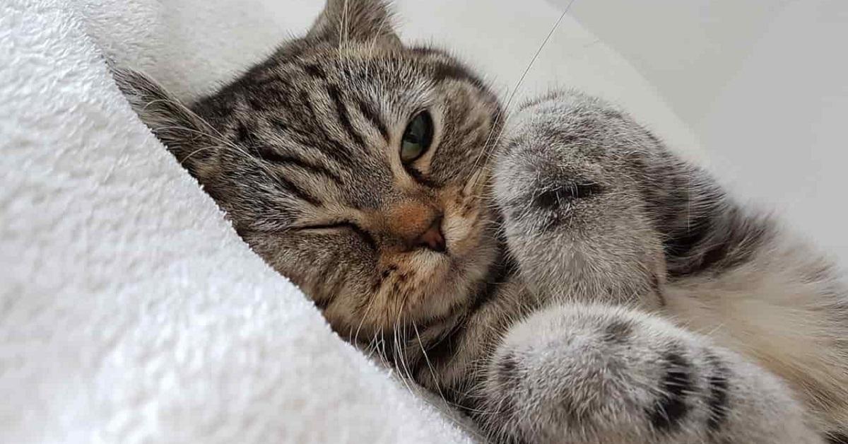 gatto disteso