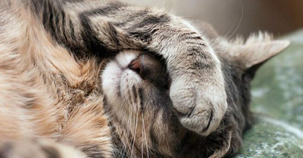 gatto con zampa su occhi