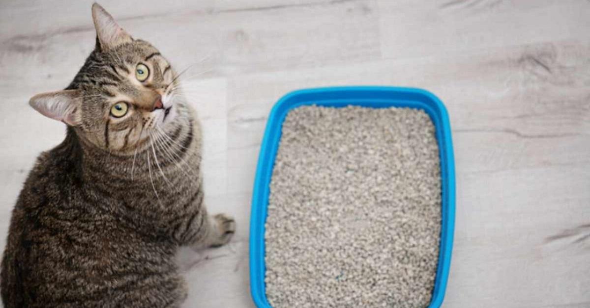 gatto accanto alla lettiera