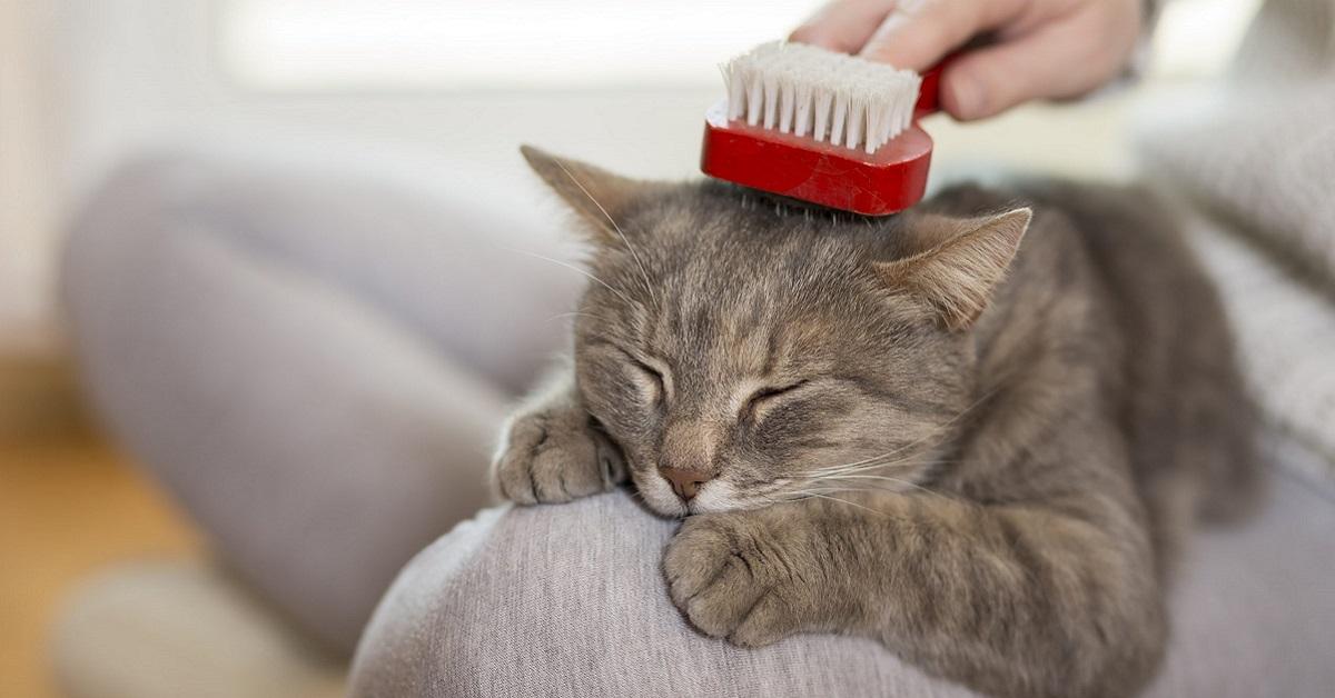 come spazzolare il gatto