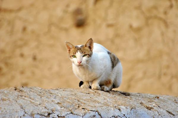 gatto vuole leccare il muro