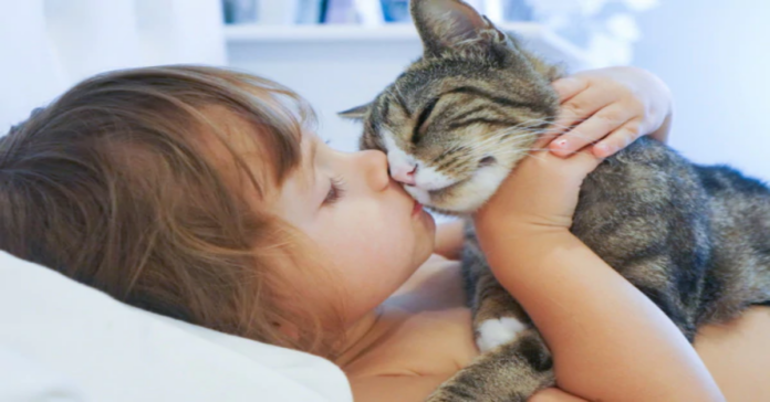 bimba e gatto