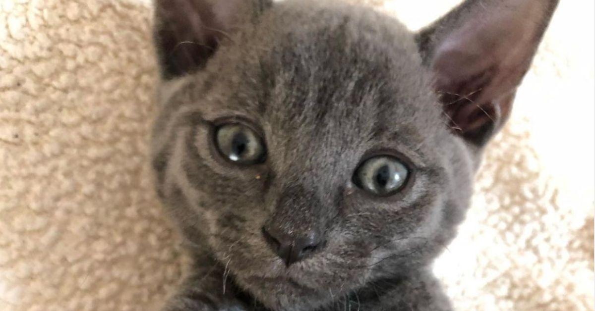 cucciolo felino occhi teneri