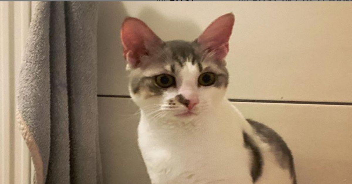 gatto con musetto simpatico