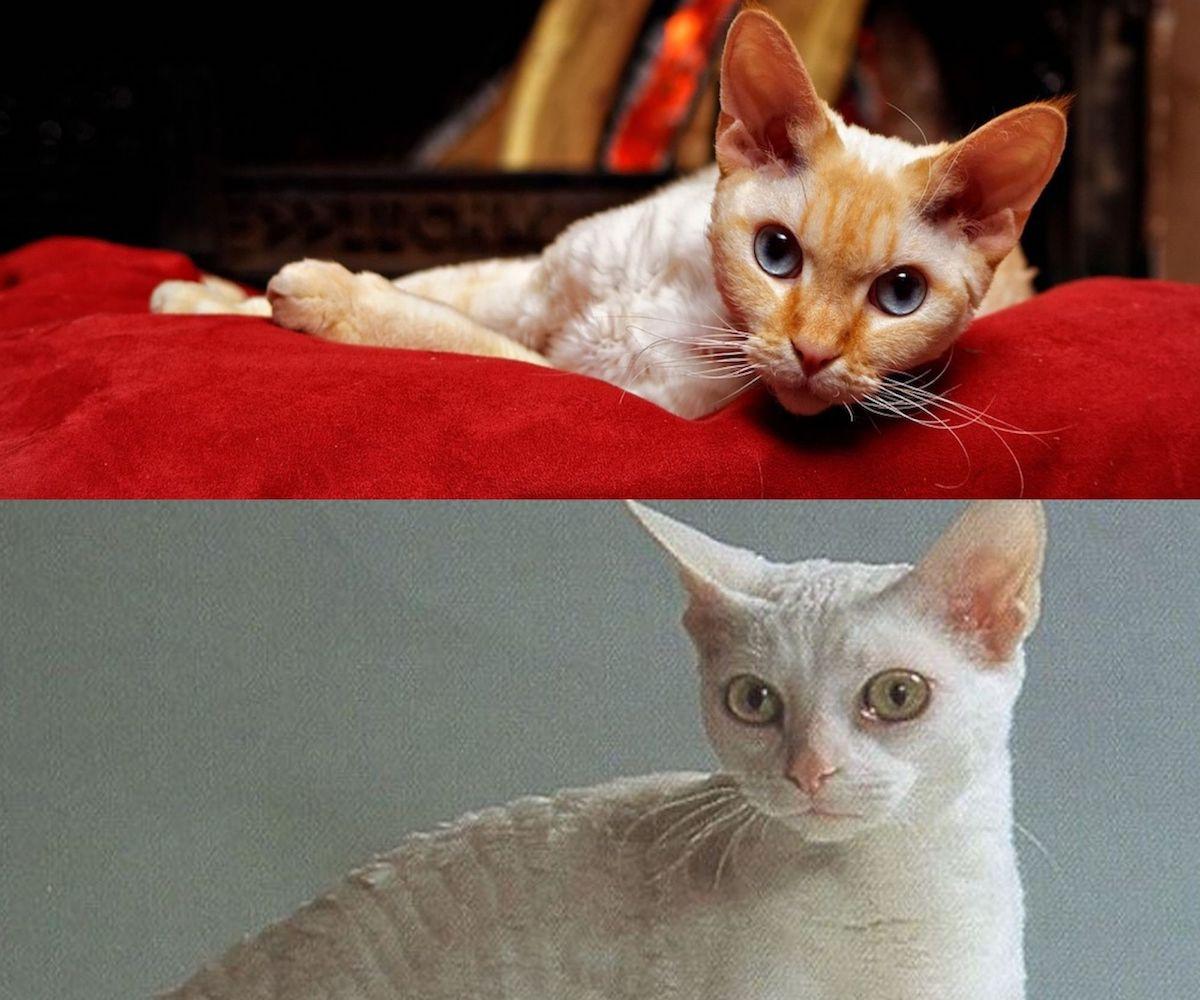 gatti a confronto