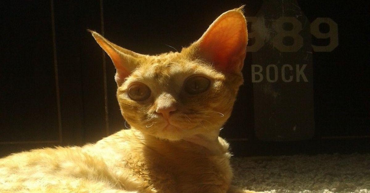 gatto dallo sguardo intenso