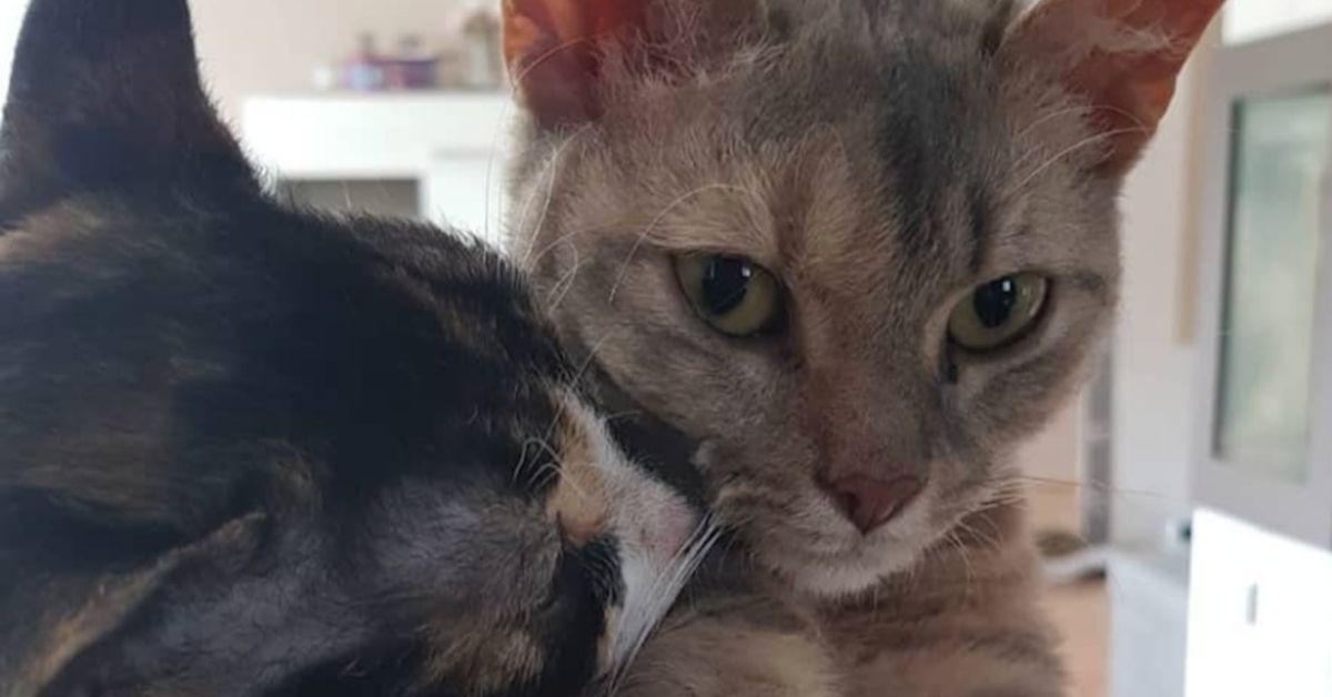gattini si danno baci
