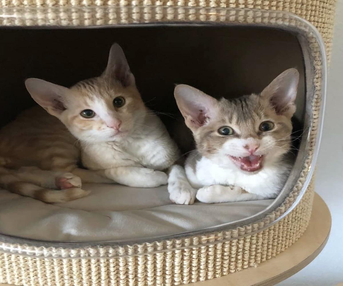 gattini si divertono insieme