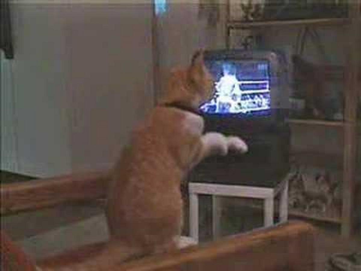 gizmo gatto mette in pratica insegnamenti