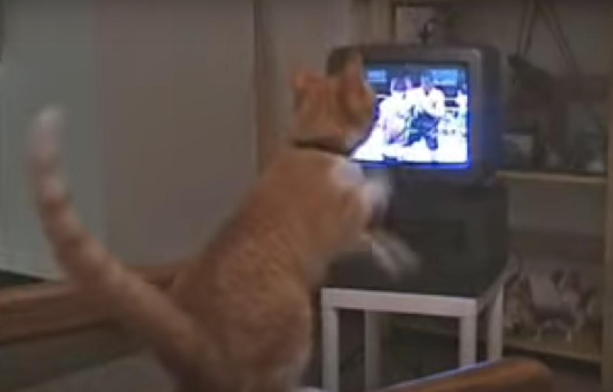 gizmo gattino sera davanti tv