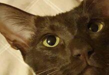 gattino sguardo dolce