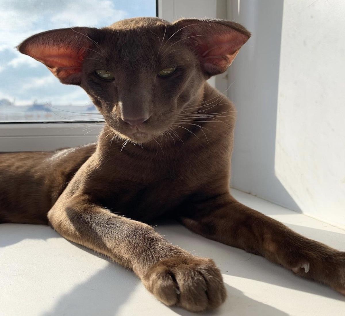 gatto sguardo intrigante