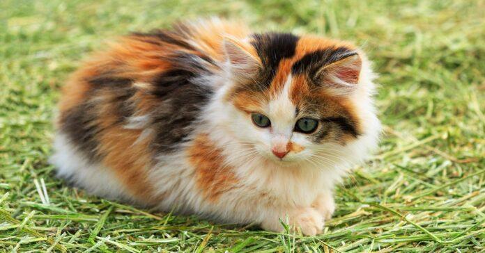 helen gattina cieca