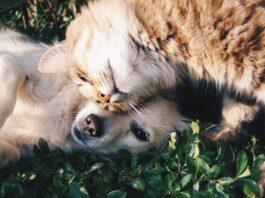 gatto che fa le fusa a un cagnolino