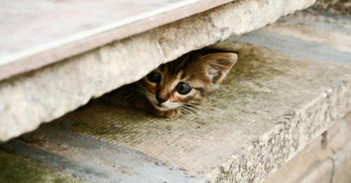 gattino timoroso