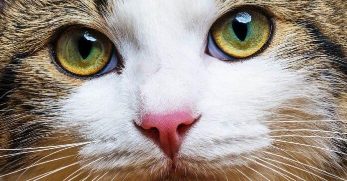 gatto in primissimo piano