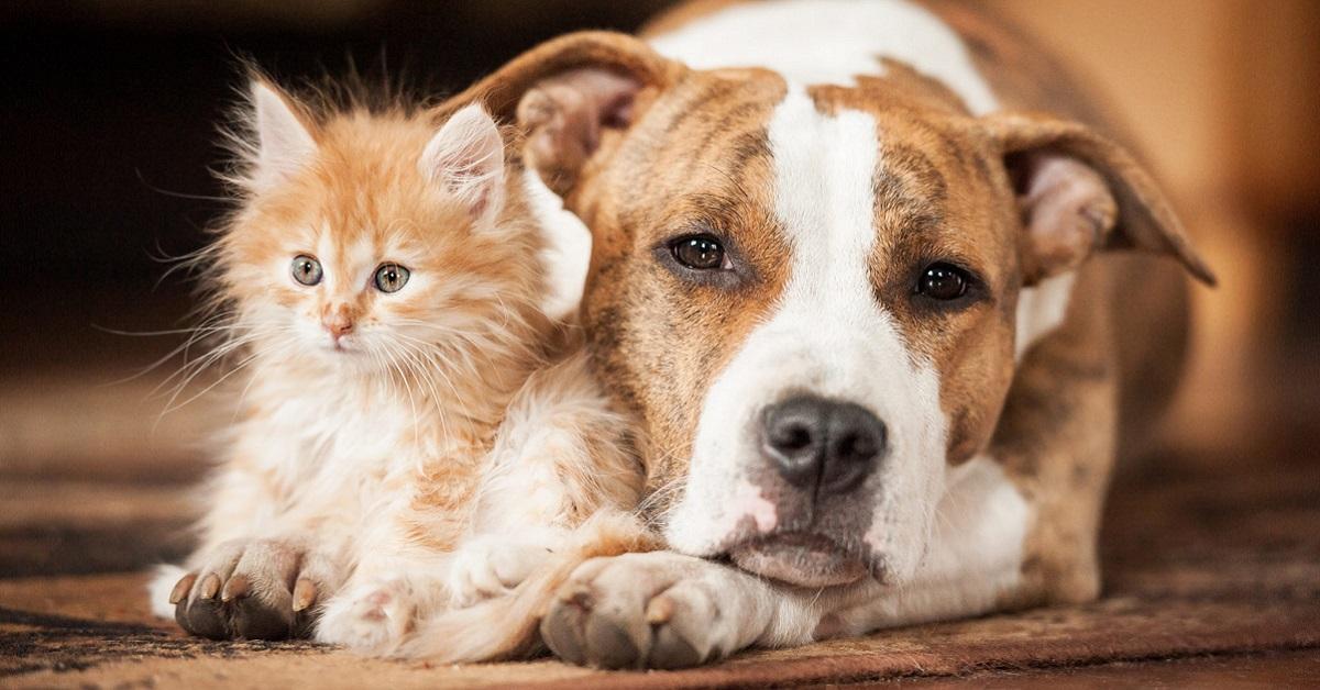 gattino e gatto gigante