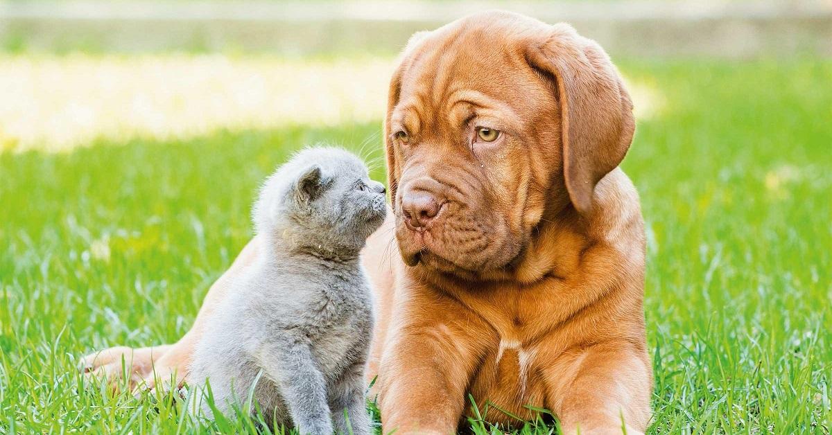 gatto e cane si guardano